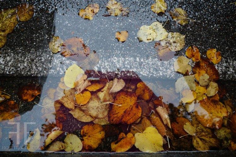 foglie-nella-pozzanghera